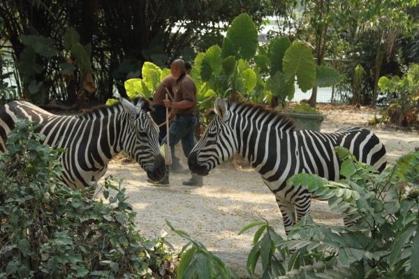 シンガポール動物園2